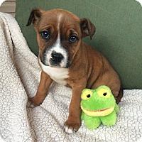 Adopt A Pet :: Nate - Greensboro, GA