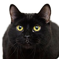 Adopt A Pet :: Fuzz Lightyear - Adrian, MI