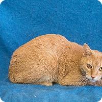 Adopt A Pet :: Theotis - Dearborn, MI