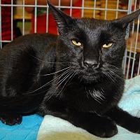 Adopt A Pet :: Blue - Whittier, CA