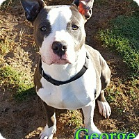 Adopt A Pet :: George - Pensacola, FL