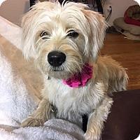 Adopt A Pet :: Syble / Roxy - Houston, TX