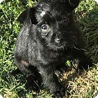 Adopt A Pet :: Petey - Mesquite, TX
