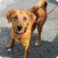 Adopt A Pet :: Erika - Ceres, VA