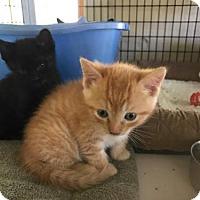 Adopt A Pet :: Yellowstone - Freeport, FL