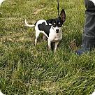 Adopt A Pet :: Moo Moo
