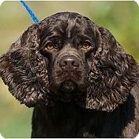Adopt A Pet :: Hershey - Providence, RI