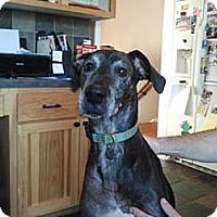 Adopt A Pet :: Bella - Inver Grove Heights, MN
