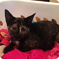 Adopt A Pet :: Trina - Byron Center, MI