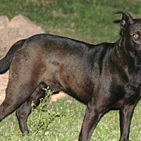 Adopt A Pet :: Bernie - Cleburne, TX