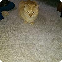 Adopt A Pet :: Dallas - Naples, FL