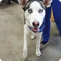 Adopt A Pet :: Zoe - Saskatoon, SK