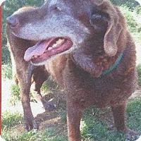 Adopt A Pet :: Nestle - Ogden, UT