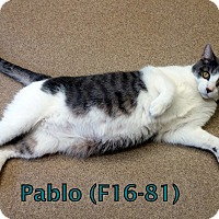 Adopt A Pet :: Pablo - Tiffin, OH