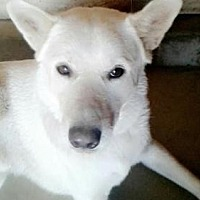 Adopt A Pet :: Cosmo - Romoland, CA