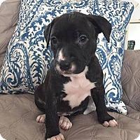 Adopt A Pet :: Jan - Greensboro, NC