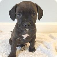 Adopt A Pet :: Titan - Spring Lake, NJ
