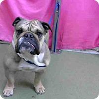 Adopt A Pet :: URGENT on 3/29@DEVORE - San Bernardino, CA