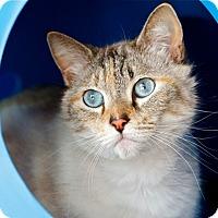 Adopt A Pet :: Stella - Coronado, CA