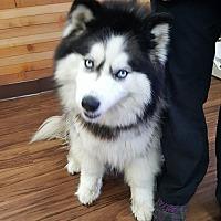 Adopt A Pet :: LUNA - Apache Junction, AZ