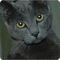 Adopt A Pet :: Ivy Blue - Chula Vista, CA