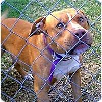 Adopt A Pet :: ZEUS - dewey, AZ