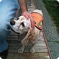 Adopt A Pet :: RED - Tacoma, WA
