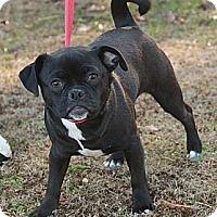 Adopt A Pet :: Missy (esther) - Brattleboro, VT