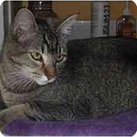 Adopt A Pet :: Slinky (inquisitive!) - Portland, OR