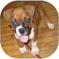 Adopt A Pet :: New Puppy - Sunderland, MA