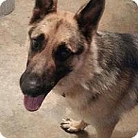 Adopt A Pet :: Maximus - Moulton, AL