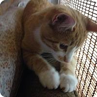 Adopt A Pet :: Max - Wellington, OH
