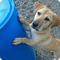 Adopt A Pet :: Gypsy - Surrey, BC
