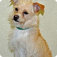 Adopt A Pet :: Cassanova - Port Washington, NY