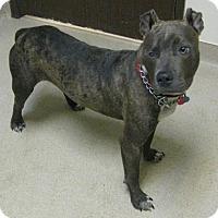 Adopt A Pet :: Ryder - Gary, IN
