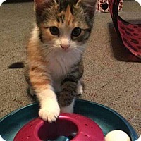 Adopt A Pet :: Lacey - Mansfield, TX
