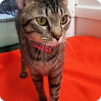 Adopt A Pet :: Khinshee - Jackson, MO