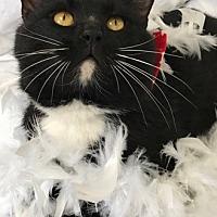 Adopt A Pet :: Sullivan - Murfreesboro, NC