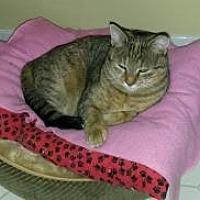 Adopt A Pet :: Lady - Raritan, NJ
