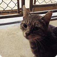 Adopt A Pet :: AJ - Shelby, MI
