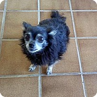 Adopt A Pet :: Lexi - Resident Angel - Quentin, PA