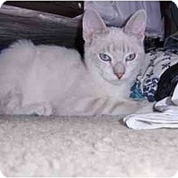 Adopt A Pet :: Bonita - Los Angeles, CA