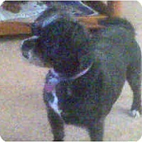 Adopt A Pet :: Cookie - Scottsdale, AZ