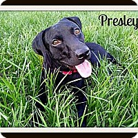 Adopt A Pet :: Presley - Kingwood, TX