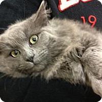 Adopt A Pet :: Amelia - Pittstown, NJ