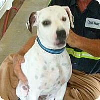 Adopt A Pet :: Hope - Windsor, MO