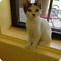 Adopt A Pet :: Desta, Colleen, Hector, Marcel - Lake Charles, LA