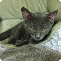 Adopt A Pet :: Jack - East Meadow, NY