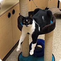 Adopt A Pet :: Shelby - Chesterfield Township, MI