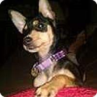 Adopt A Pet :: Evie - Columbus, OH